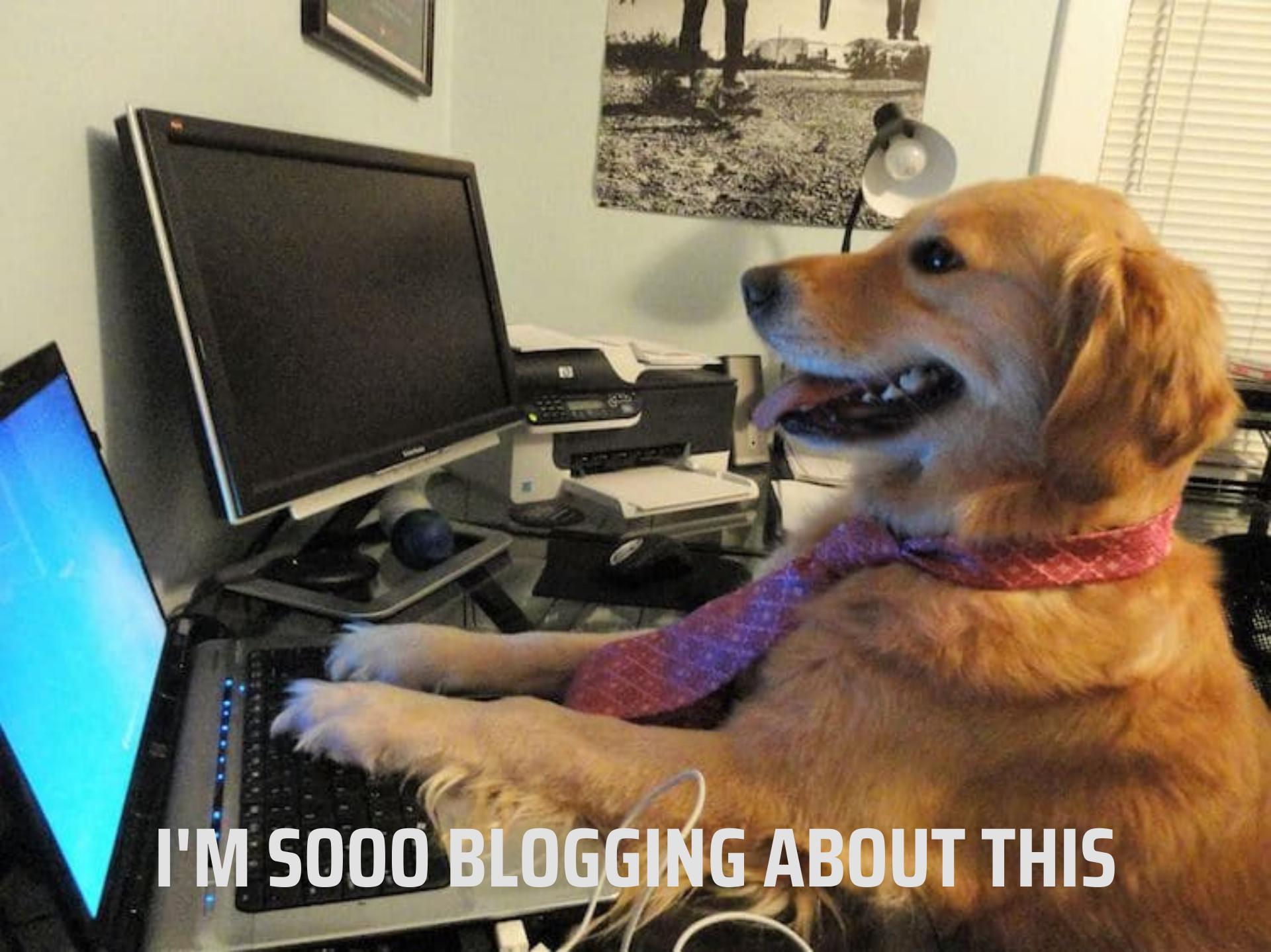 dog computer new blog